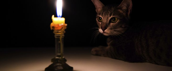 July 15 is National Pet Fire Safety Day