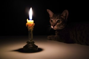 stock-photo-000058742742_Small_Cat+Candle (300 x 200)